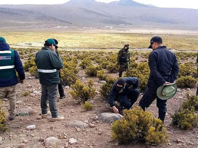 Realizan amplio operativo contra cazadores furtivos de vicuñas en Tacna
