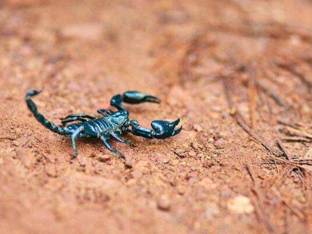 España: joven sufre picadura de escorpión tras abrir bolso comprado por Internet