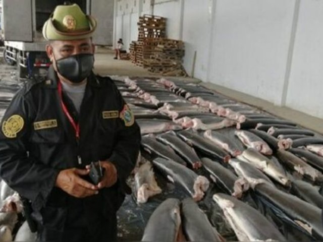 Tumbes: incautan 11 toneladas carne de tiburón que iba a comercializarse en el país