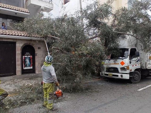 Multan a chofer con más de 13 mil soles por derribar árbol y poste en Surco