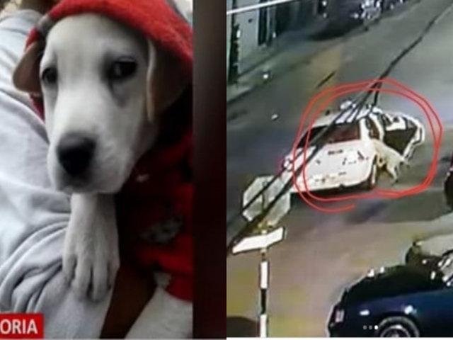 """La Victoria: Continúa la búsqueda de """"Zeus"""", el perro de los bomberos que fue robado hace 5 días"""