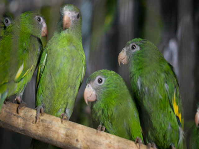 ¡Por malcriados! Reino Unido: loros son aislados por decir malas palabras a visitantes en zoológico