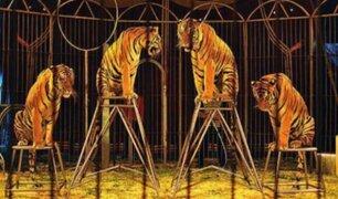 ¡Con los días contados! Francia: animales salvajes ya no formarán parte de shows en circos