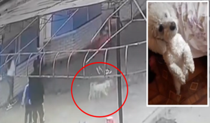 Chorrillos: familia denuncia que robaron a su perro en estacionamiento de playa