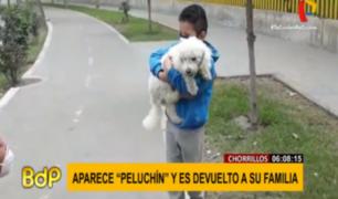 ´Peluchín': perro que desapareció en Chorrillos se reunió con sus dueños