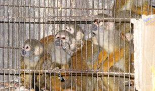 Animales silvestres: Aprueban ordenanza para promover protección y erradicar maltrato