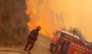 Chachapoyas: rescatan a oso hormiguero que sufrió quemaduras de segundo grado en incendio forestal