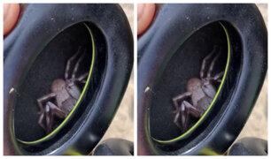 ¡De terror! Hombre descubrió una araña en sus audífonos tras sentir cosquillas en la oreja