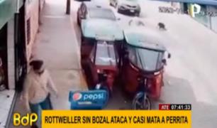 Ate: feroz perro rottweiler casi mata a mascota de una familia