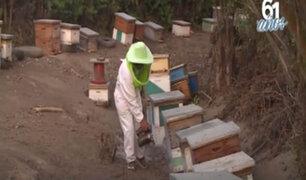 La importancia de las abejas: apicultura orientada a la polinización