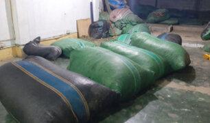 Incautan más de 400 kilos de hoja de coca durante un amplio operativo en el Vraem