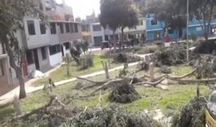 ¡Atentado a la naturaleza! Denuncian que desconocidos talaron 6 árboles para evitar la presencia de delincuentes en SJL