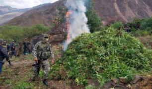 Ayacucho: destruyen laboratorios clandestinos y más de 250 mil plantaciones de marihuana