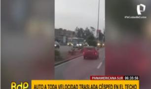 Auto circula por la Panamericana Sur con el techo repleto de césped