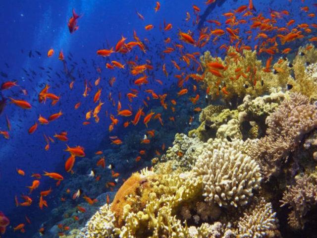 Fauna a nivel mundial ha disminuido en un 68% en casi 50 años