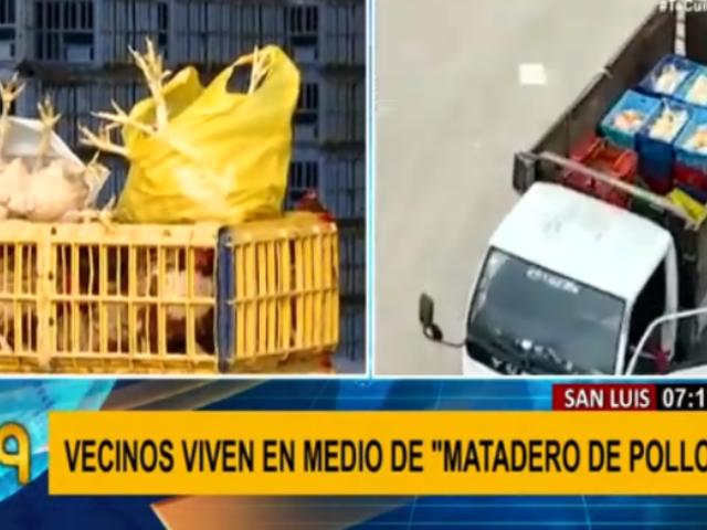 San Luis: vecinos exigen cierre de mataderos de pollos no autorizados