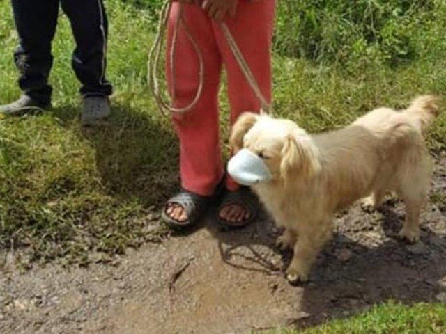 Perro utiliza mascarilla cuando acude a campaña de vacunación