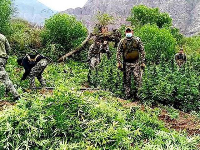 Ayacucho: FFAA incineran 15 mil plantaciones de hoja de marihuana