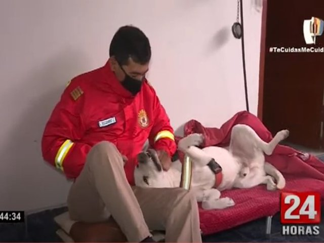 La Victoria: bomberos encontraron a Zeus, mascota de la compañía