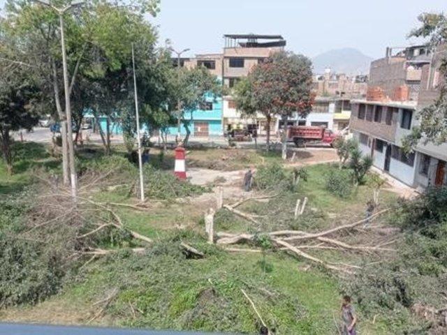 Tala de árboles en parque de SJL sería para construir losa deportiva