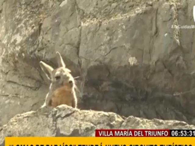 VMT: 'Lomas del Paraíso' se alista a reabrir con nuevo circuito turístico