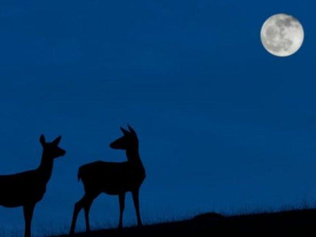 """""""Luna Azul 2020"""": evento cósmico que podrá verse este 31 de octubre"""