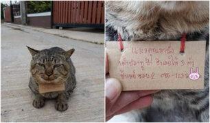 Gato reapareció en su casa luego de tres días y con una deuda