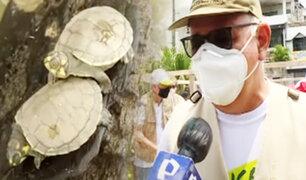 EXCLUSIVO | Desde Iquitos la conservación de las tortugas taricayas