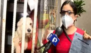 Maltrato animal: perros en aparente estado de abandono sufren al interior de una vivienda