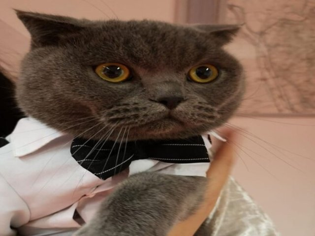Tablet permitió recuperar en tiempo récord a gatito robado con engaños