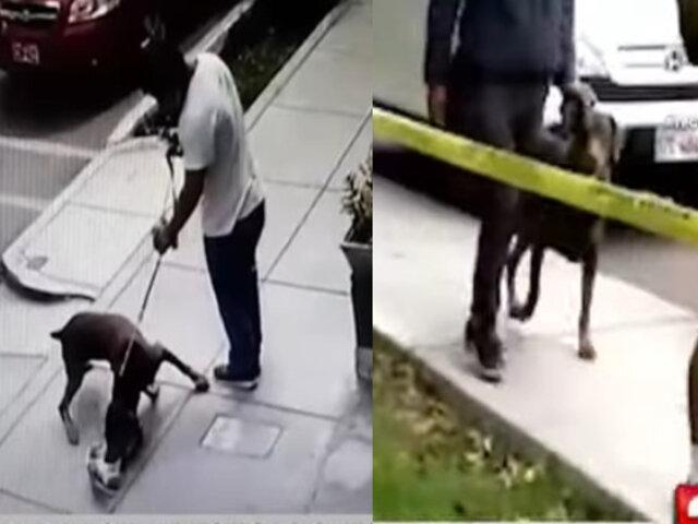 Dueño de perro que mató a gato permite que su mascota continúe saliendo a la calle sin bozal