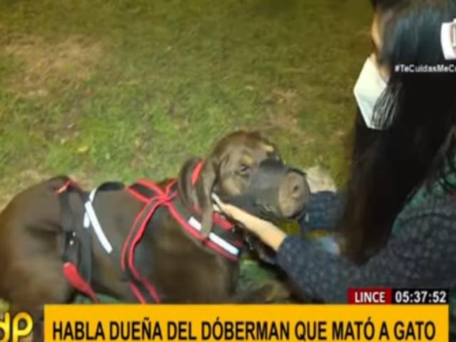Lince: dueña de doberman que mató a gato dijo estar dispuesta a asumir responsabilidad