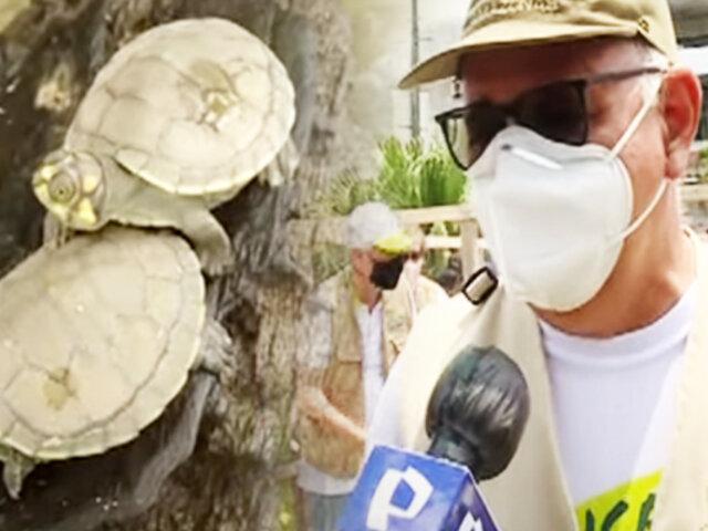 EXCLUSIVO   Desde Iquitos la conservación de las tortugas taricayas