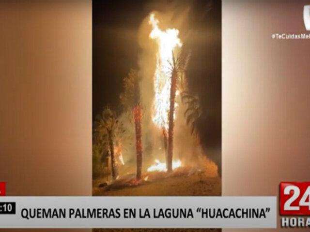 ¡Atentado a la naturaleza! Queman siete palmeras de la 'Laguna de la Huacachina' en Ica