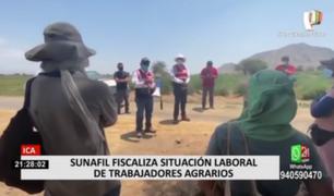 Sunafil inspecciona empresas agroindustriales tras denuncias de abuso laboral en Ica