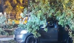 ¡Estuvo a punto de morir aplastado!: hombre sobrevive tras caída de árbol sobre su auto