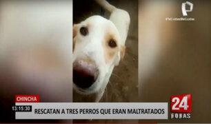Chincha: jóvenes activistas rescatan a perritos maltratados