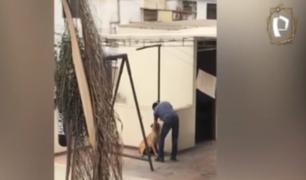 Surco: sujeto fue captado golpeando cruelmente a su perro