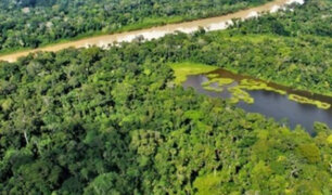Impulsan proyecto que busca poner en valor los bosques amazónicos de Loreto