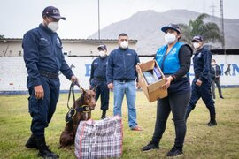 Brigada canina de la MML reforzará campaña de sensibilización contra la pirotecnia