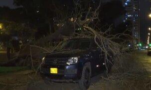Árbol cae y destruye auto en parque de Pueblo Libre