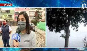Pueblo Libre: vecinos alarmados por árboles enfermos caen sobre autos