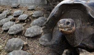 Brasil: nacen más de 92 mil crías de tortugas gigantes