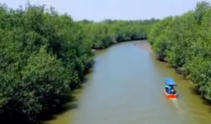 De los manglares a la mesa: el oficio extremo de la extracción de conchas negras y cangrejos