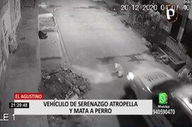 El Agustino: perro muere tras ser atropellado por patrullero de Serenazgo
