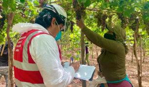 Ley agraria: Ejecutivo plantea que salario diario de trabajadores suba hasta S/ 45