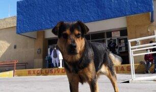 Covito, el perro que lleva 30 días esperando a su amo que murió por Covid-19
