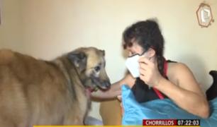Chorrillos: mujer postrada tras ataque de pitbull denuncia que dueño no se hace responsable