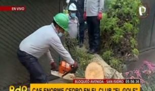 San Isidro: caída de enorme árbol del club 'El Golf' cerró tramo de Av. Miró Quesada