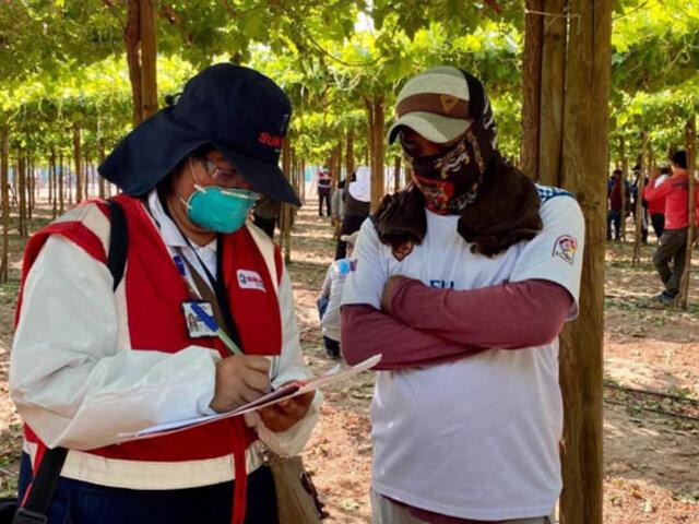 Al menos 3,200 trabajadores agrarios de Ica fueron incorporados a planilla, informa Sunafil
